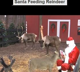 Santa s reindeer cam