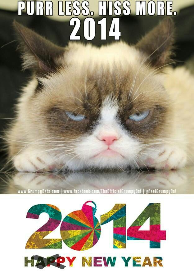 grumpy cat happy new year comedy truth and lies pinterest