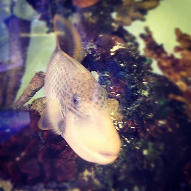 Saltwater fish at petco petco saltwater fish saltwater for Petco fish aquariums