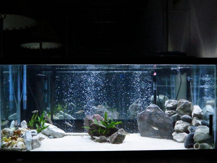 Fish tank decorations 75 gallon 75 gallon tanganyikan for Fish tank divider 5 gallon