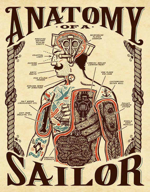 Sailor anatomy