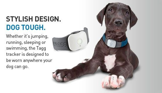 tracking device for dogs iphone