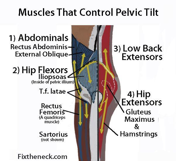 Pelvic Tilt Posture