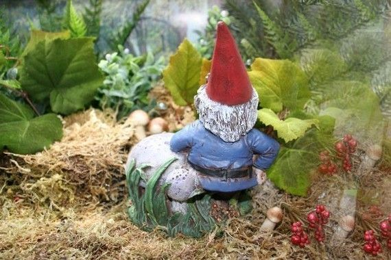 garden gnomes for sale photograph garden gnomes for sale c