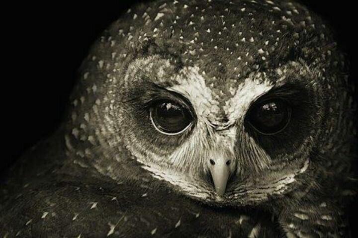 owl eyes on you medina oh
