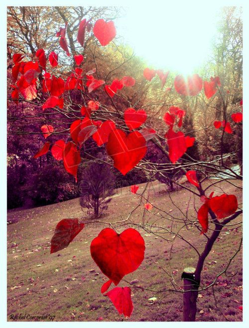 Hearts in nature - lots of love for the leaves of this tree xx