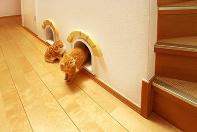 Cat room hidden under the stairs.