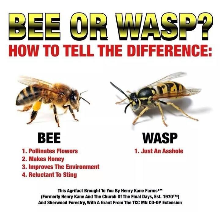 Important classification tool | Bees | Pinterest