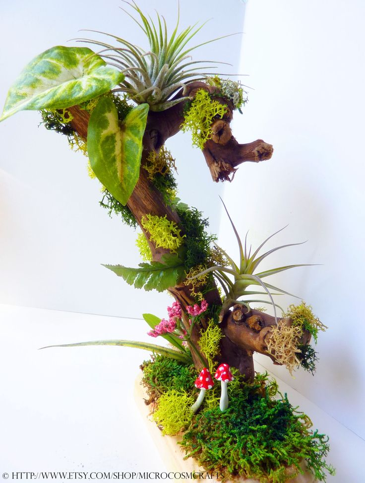 Tillandsia air plant grapewood sculpture arrangement for Garden arrangement of plants
