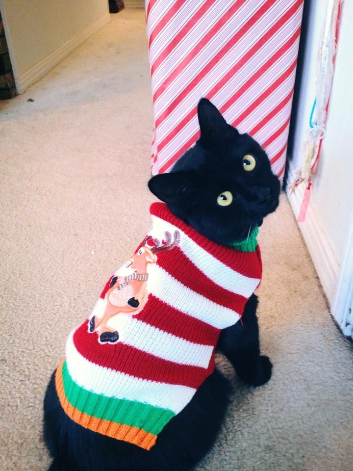 Cat Christmas Sweater | dog, cat, and chicken sweaters and hats | Pi