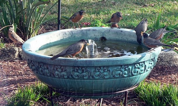 bird sanctuary is not a sanctuary without good clean water all four