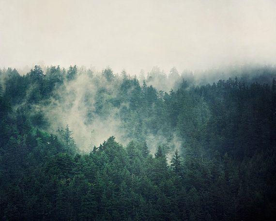 landscapes trees fog - photo #13