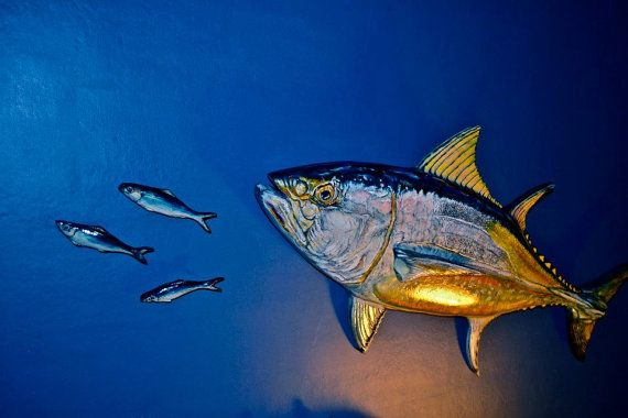 Pin by flukeskywalkers fishing arts ct on fishing for Blue fin fish