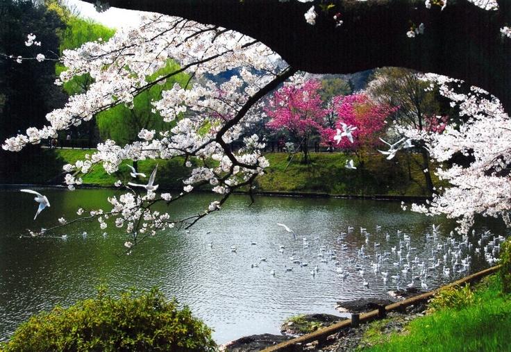Kanagawa Japan  City pictures : Kanagawa, Japan | Japanese Spring | Pinterest