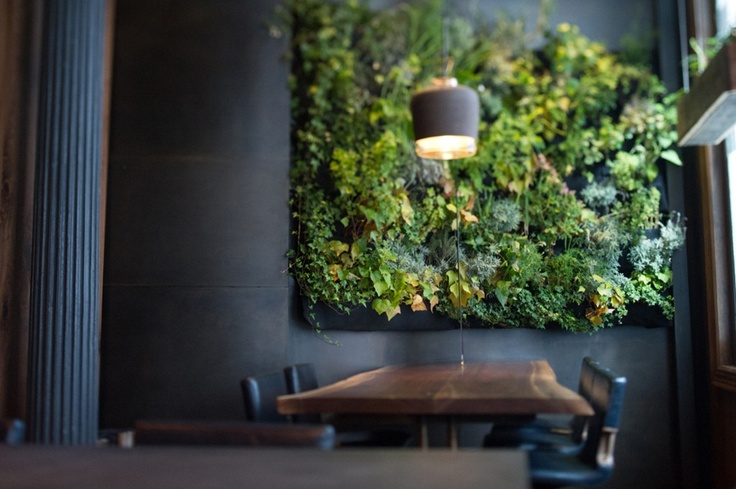 Herb wall atera restaurant nyc lk pinterest Indoor living wall herb garden