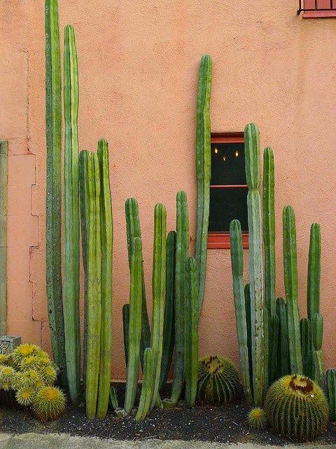 #destinationsummer #cacti #cactus #desert