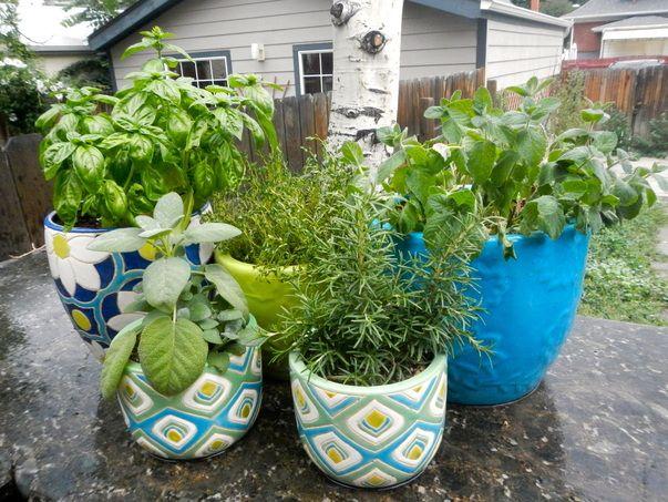 outdoor indoor herb garden for the home pinterest