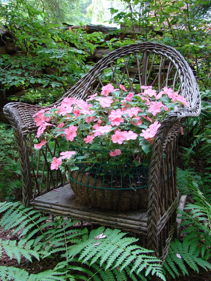 Container of Impatience on a wicker chair ~ perfect for a shade garden