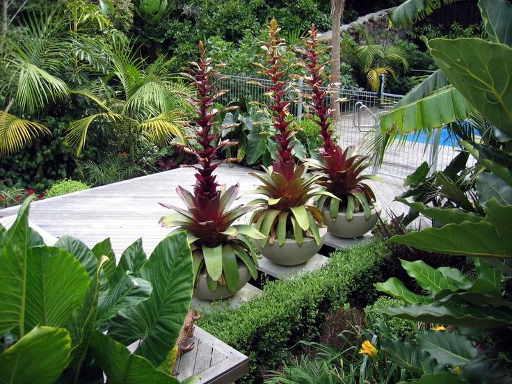 Subtropical garden design seed landscapes pinterest for Garden designs nz