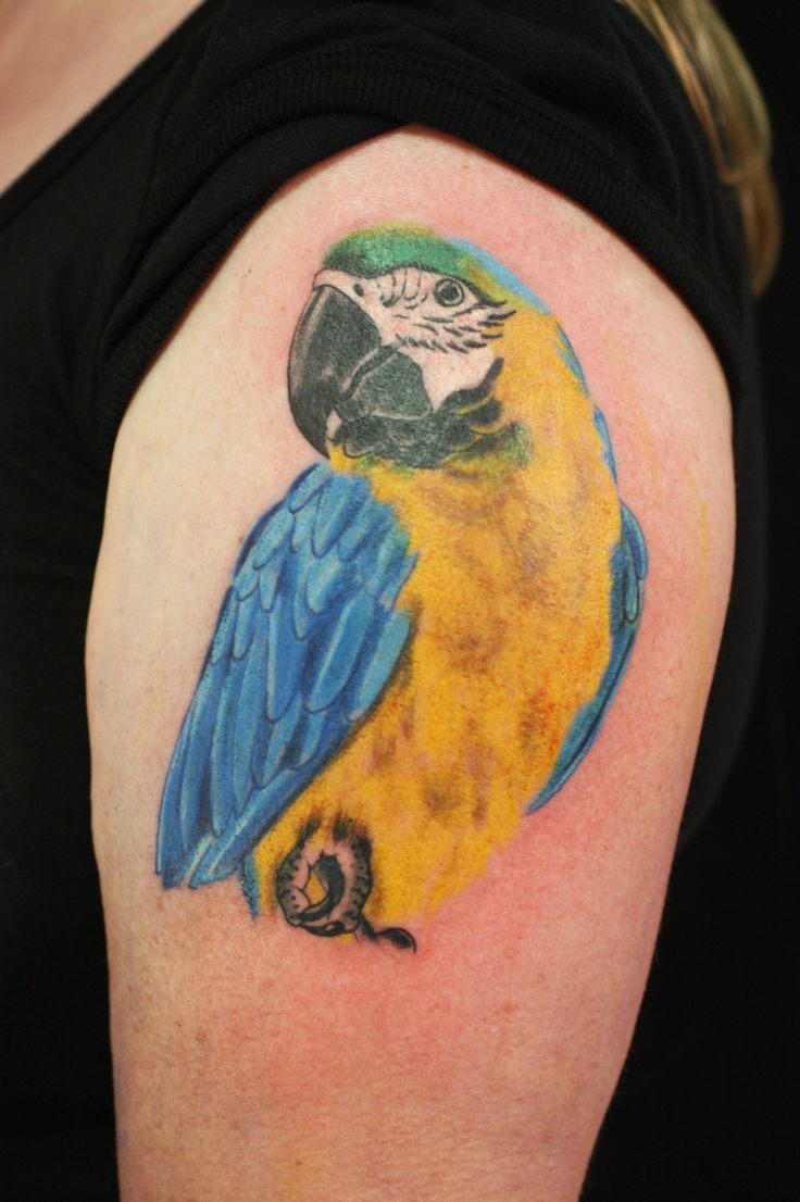 parrot parrot tattoos