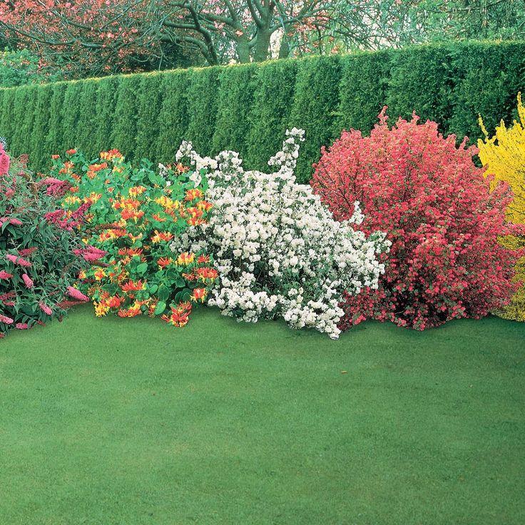 С чем сажать цветущие кустарники