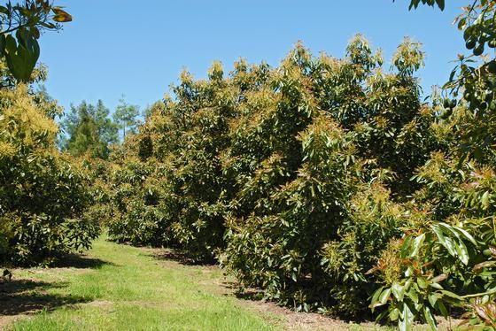 Elmsley Orchard... Elmsley