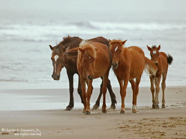 Ride a horse on a beach.