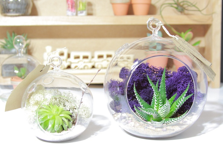 X-Large Terrarium Glass with Cacti Succulent