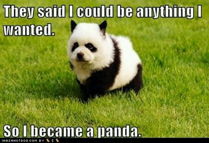 panda chow chow puppy all things cute pinterest