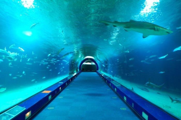 Aquarium, Valencia Travel Advisor Pinterest