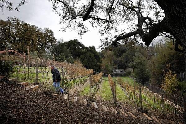 Backyard Vineyard Design : Backyard wineries, Santa Clarita, California ~ Tim Carpenter walks