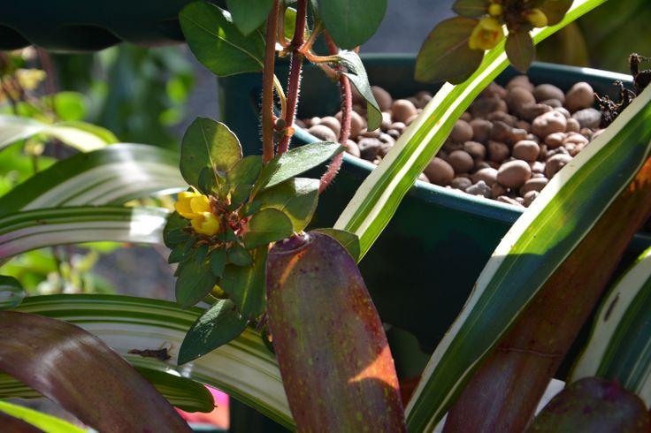 plantas sol jardim vertical:Sol da manhã batendo nas plantas.
