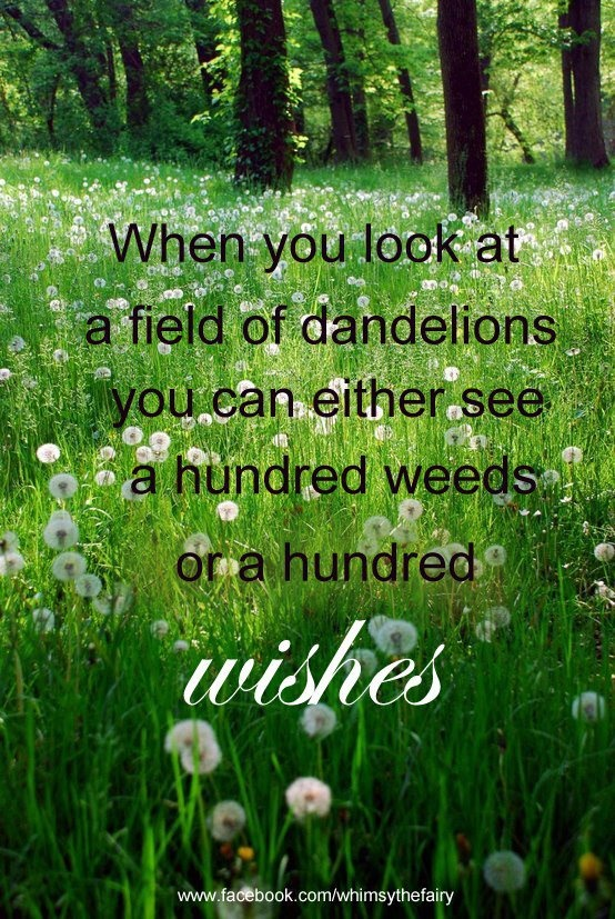 I see Dandelions as a wild flower. Husband hates them, mows them down and uses weed killer in our yard. No dandelions for me!