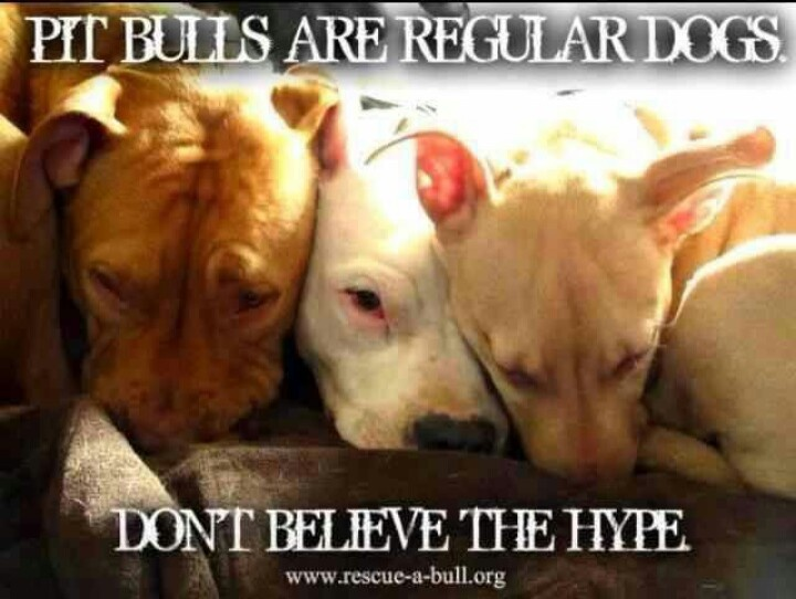 Don t believe the hype love a pit pets and more pets pinterest