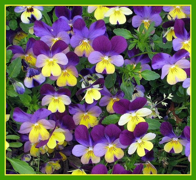 Purple and Yellow Flowers | Purple~The Color Of Royalty ...