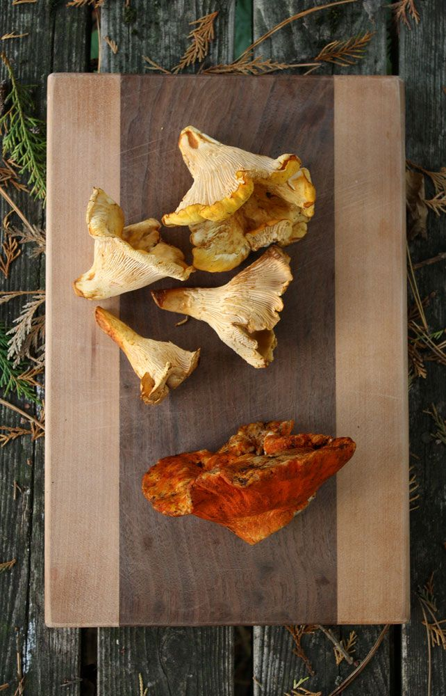 Pin by Foraged Foodie on Forage: Chanterelle Mushrooms | Pinterest