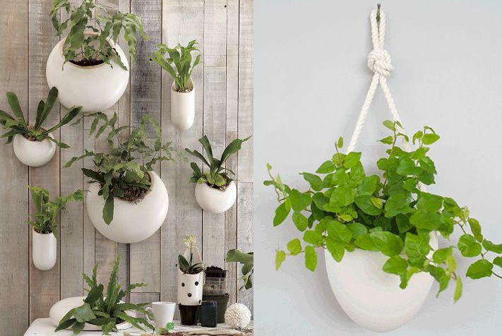 Plants For Bathrooms Images Design Inspiration