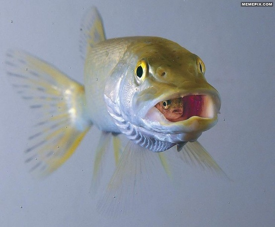 Pin by dianne johnson on the sea pinterest for Big mouth fish
