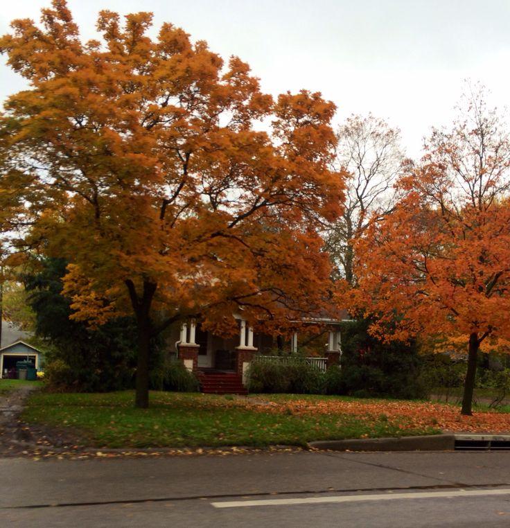 Fall trees in kansas nature amp gardening pinterest