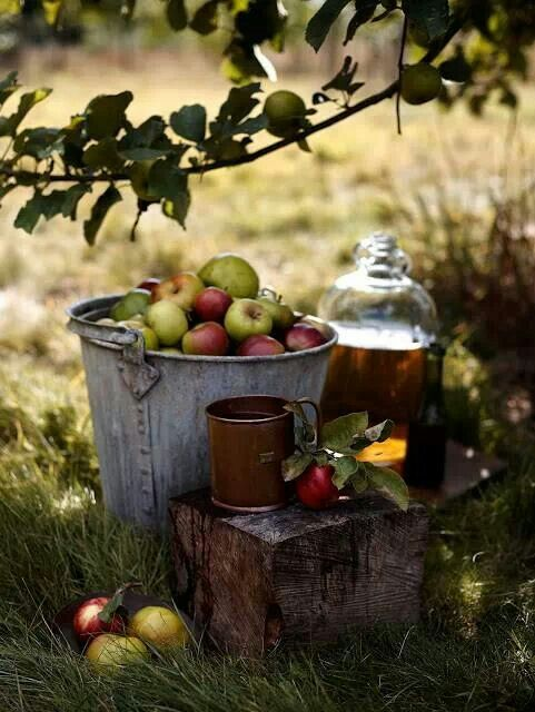 Apples for cider! | FALL INTO AUTUMN | Pinterest