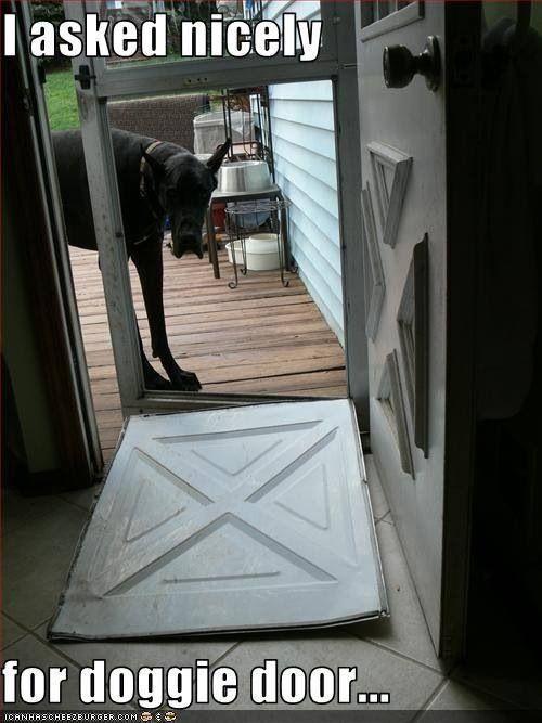 Dog Door For Great Dane Proven Dog Training