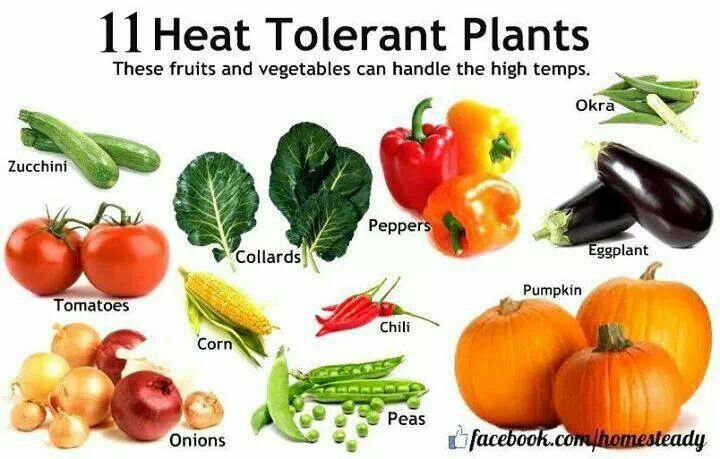 11 heat tolerant plants garden ideas pinterest - Heat tolerant plants keeping gardens alive ...