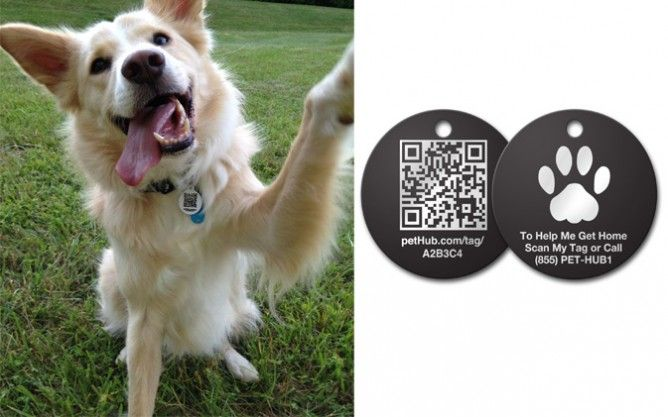dog tracking chip iphone