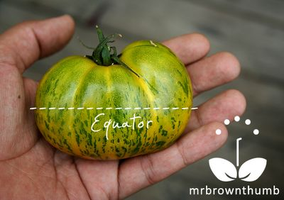 How to save tomato seeds garden pinterest