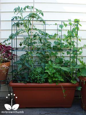 Self watering grow box gardening pinterest for Watering vegetable garden