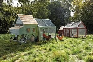 Alexandria Chicken Coop by Williams-Sonoma's Agrarian line