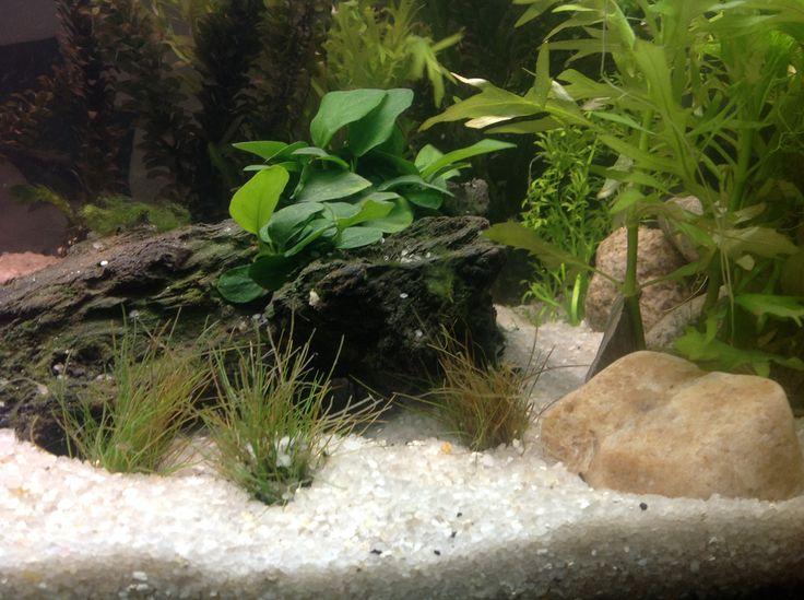 Pinned by Austen MichaelsFreshwater Aquarium Catfish