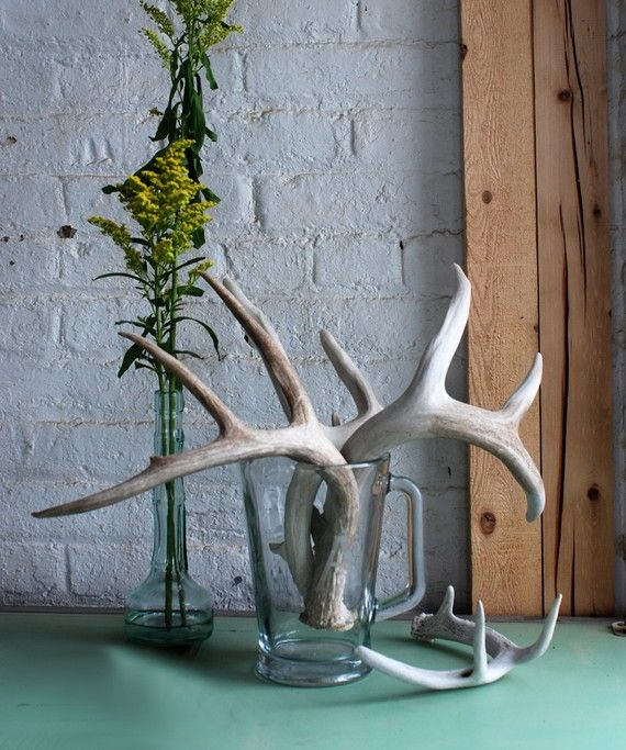 Single naturally shed deer antler for Antlers for decoration