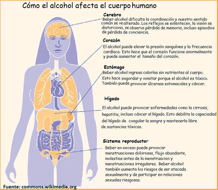 Alcohol en el cuerpo cuerpo humano pinterest for En k parte del cuerpo esta el higado