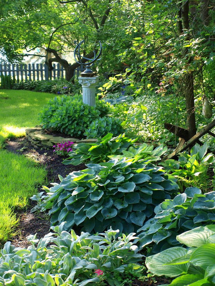 Flickr Hostas garden ideas Pinterest